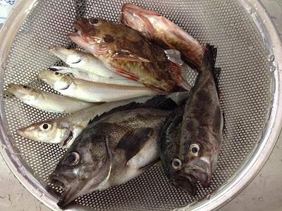 淡路島大磯港釣り 津名港釣り アジュール舞子釣り キス釣り メバル釣り