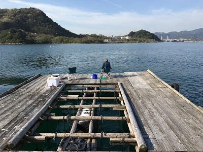 堂の浦(ウチノ海)筏 サヨリ釣り