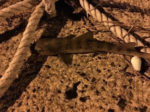 鳥取釣り アジ釣り サビキ釣り 夜釣り のませ釣り