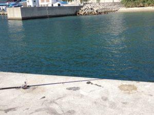 淡路島 釜口漁港釣り サンバソウ