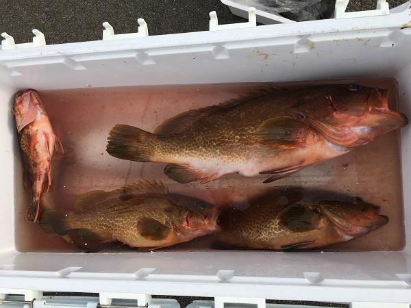 若狭和田ボート釣り アコウ釣り アオリイカ釣り ジギング エギング のませ釣り