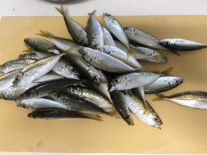 塩津漁港 豆アジ釣り 豆アジ調理 天ぷら 南蛮漬け