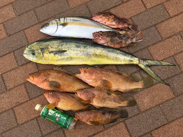 福井和田港沖 ボート釣り アコウ シイラ ヒラマサ ガシラ のませ釣り ジギング 福井釣り
