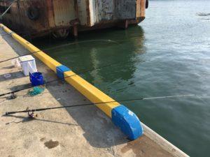 鳥取港耐震岸壁 釣り サビキ釣り サッパ  コノシロ