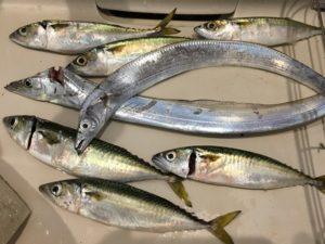 太刀魚 サバ釣り 塩焼き
