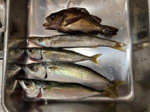 東栄地区港湾緑地 釣り 夜釣り タチウオ釣り メバル釣り 鯖釣り サビキ釣り 浮釣り